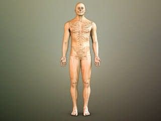 3d_anatomical_library