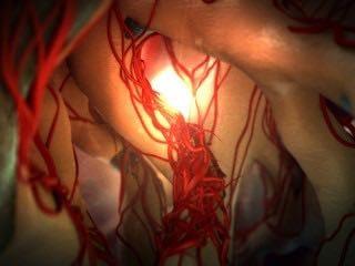 animated_internal_anatomy